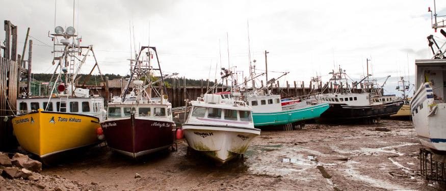 Wonders of the Bay of Fundy