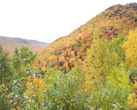 Fall Foliage, Cape Breton Island; Photo Credit: Sarah O'Connor